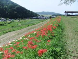 kamiyodohaijiato